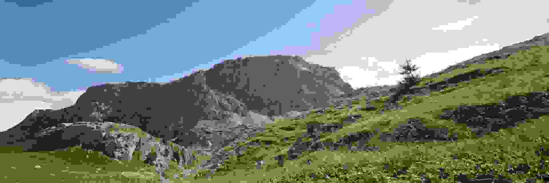 Eine Panoramaaufnahme einer saftig grünen Bergwiese