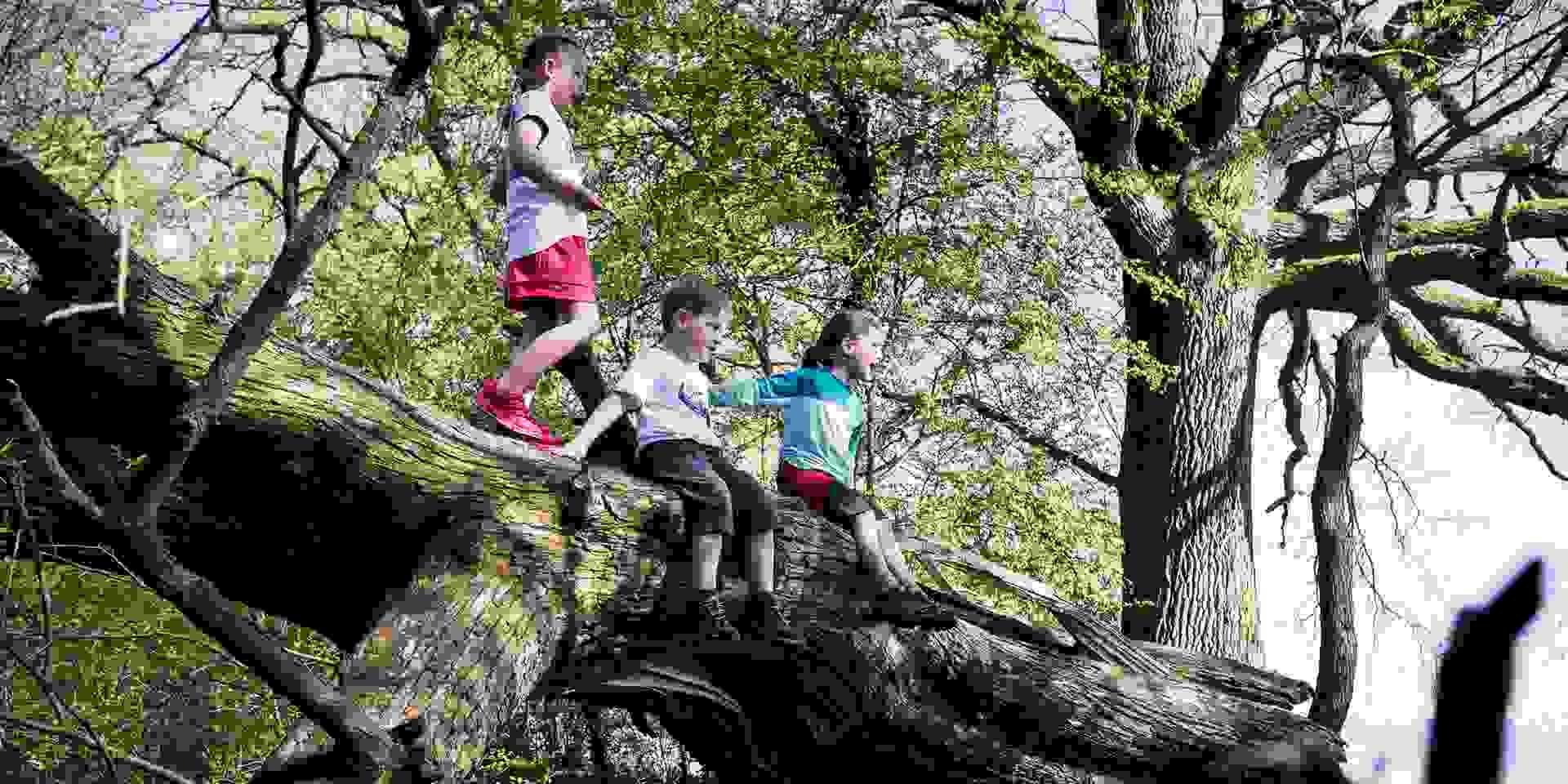 Waldkindergarten bei SportScheck