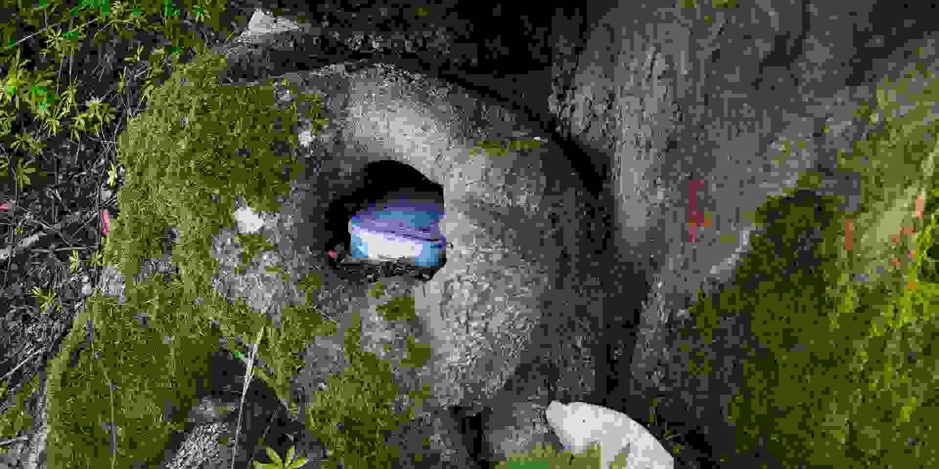 Ein Geocache liegt im Wald versteckt in einem Baumloch.