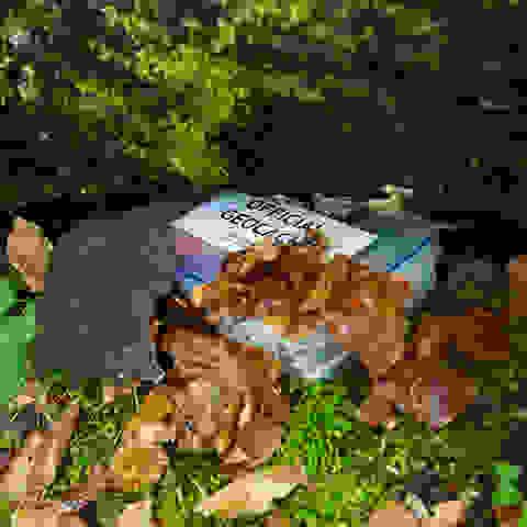 Ein Geocache liegt im Wald versteckt unter einem umgestürzten Baum.