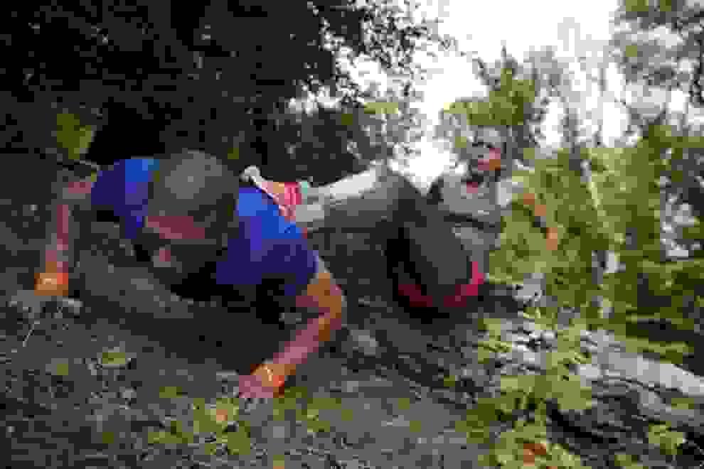 Ein Mann und eine Frau trainieren im Wald gemeinsam Liegestütze.