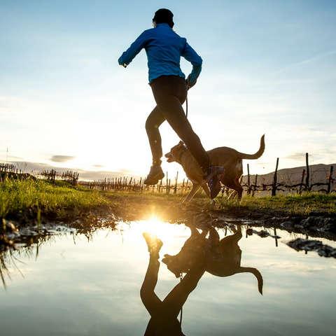 Ein Läufer joggt mit seinem Hund an einem Teich entlang