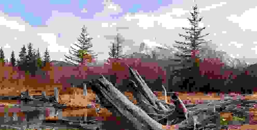 Eine große Baumwurzel steht im Vordergrund. Der Baum muss irgendwann umgefallen sein.