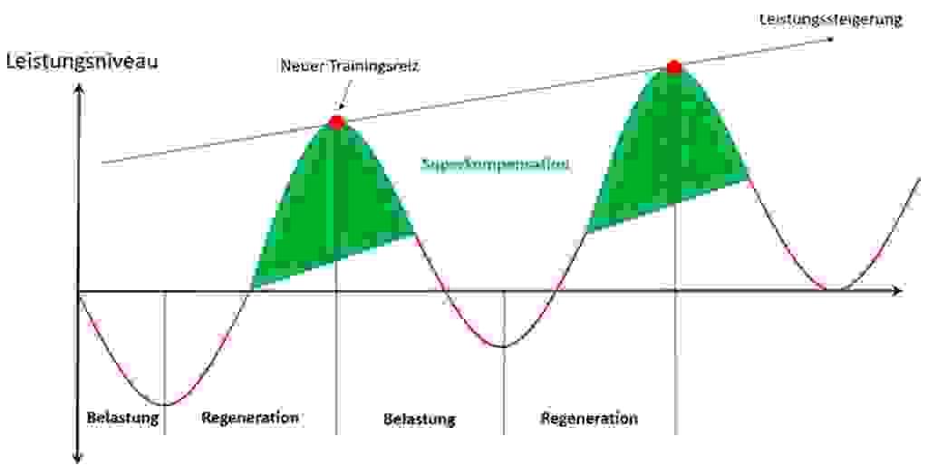 Grafische Darstellung des Prinzips der Superkompensation