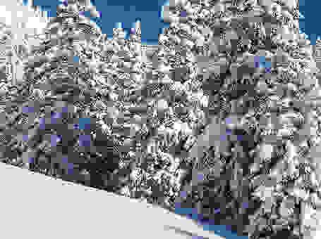 Verschneite Skipiste mit Tannenbäumen im Skigebiet Sudelfeld